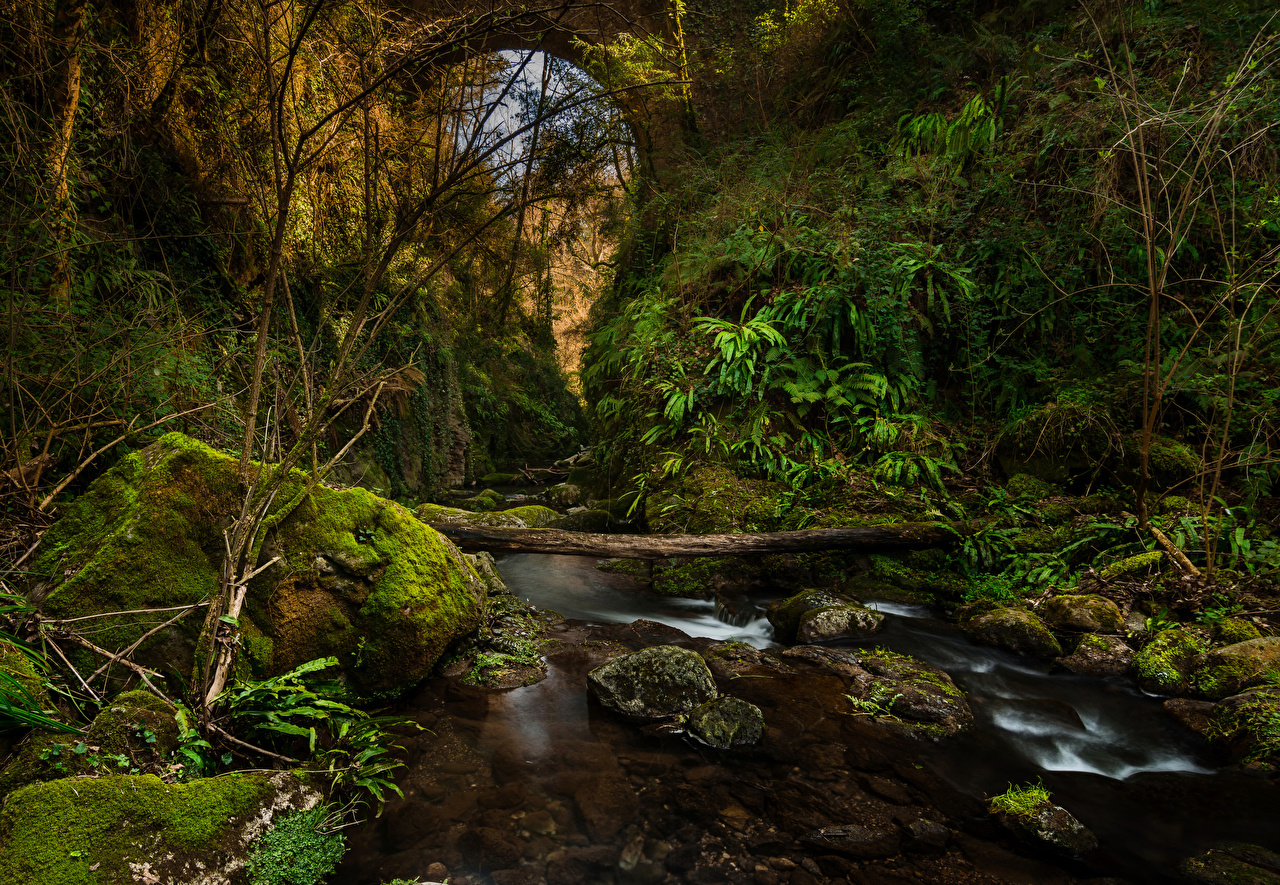Фотография Испания El Sallent Catalonia Каньон Природа мхом Камни речка каньоны каньона Мох мха река Реки Камень