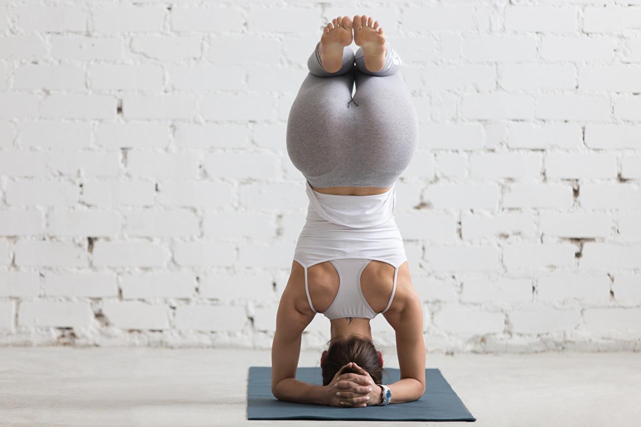 Фотография Шатенка Физические упражнения Спина Фитнес Спорт Девушки Ноги Сзади Тренировка вид