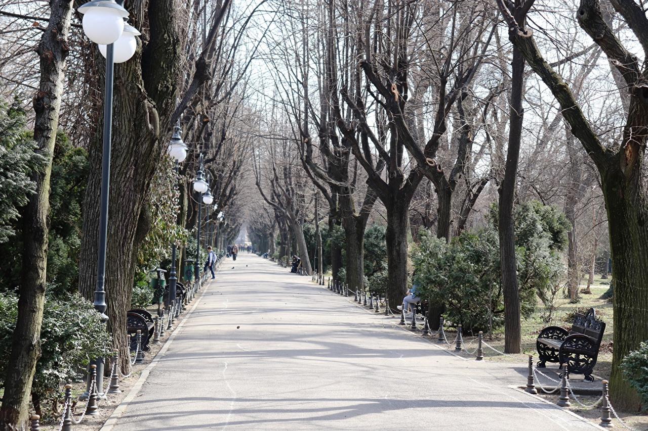 Картинки Румыния Bucharest Аллея парк Тротуар Скамейка Уличные фонари Города дерева аллеи Парки Скамья город дерево Деревья деревьев