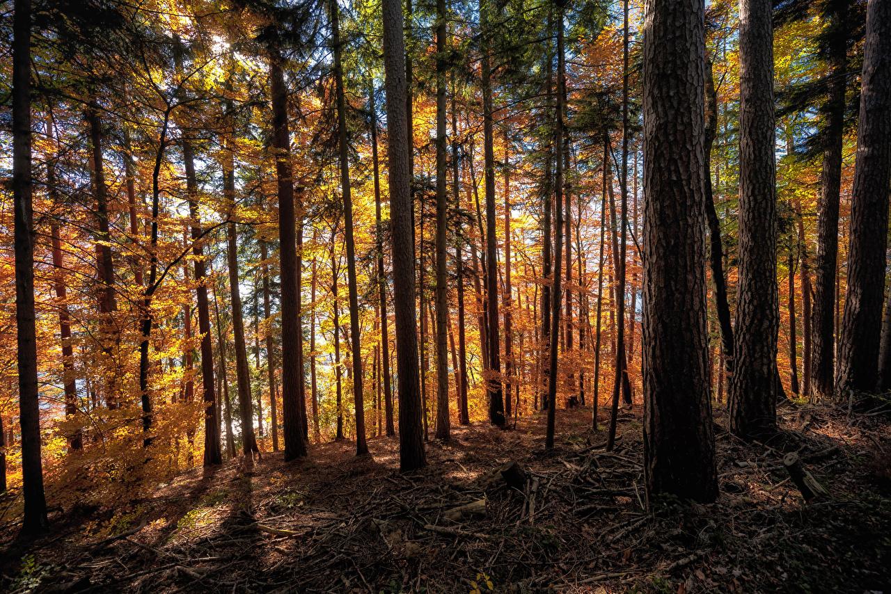 Картинка Швейцария Langenschachen Осень Природа Леса Деревья осенние