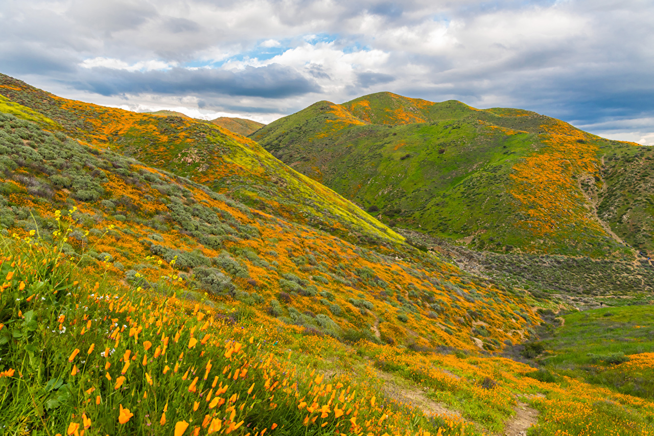 Обои для рабочего стола Калифорния США Walker Canyon in Lake Elsinore гора Природа Маки Луга Холмы Трава калифорнии штаты америка Горы мак холм холмов траве