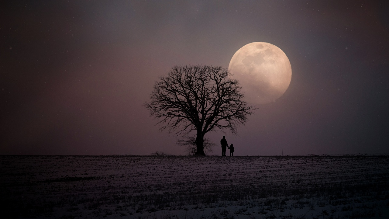 Фотография Силуэт Зима Двое Природа Луна Поля Ночные Деревья 2 вдвоем зимние Ночь