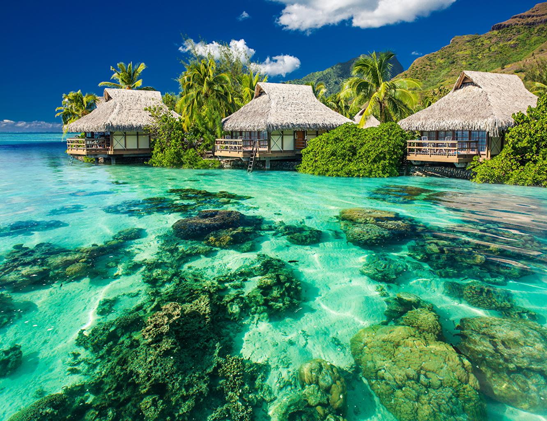 Картинка Бунгало Море Природа Пальмы Тропики