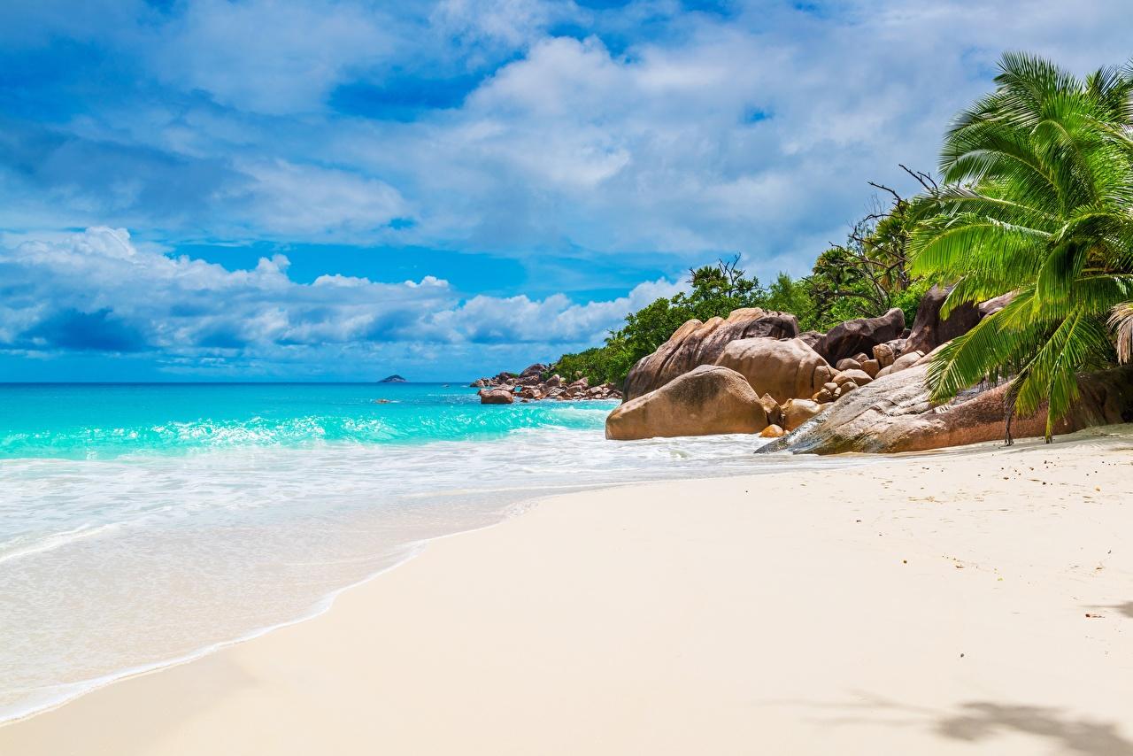 Фотография Seychelles Пляж Море Природа Песок Пальмы тропический Камни пляжа пляже пляжи песке песка пальм пальма Тропики Камень