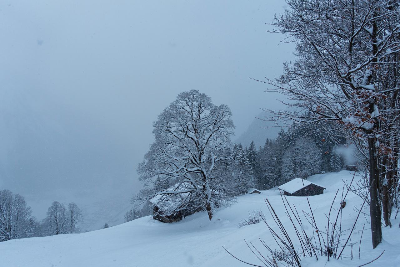 Картинка Швейцария Braunwald зимние Природа Снег Здания Деревья Зима Дома