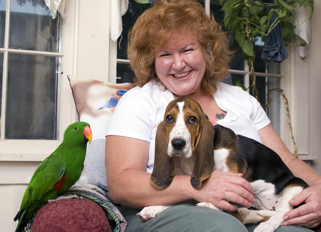 Фото Бассет хаунд Собаки Попугаи шатенки улыбается женщины Животные собака Шатенка Улыбка Женщина животное