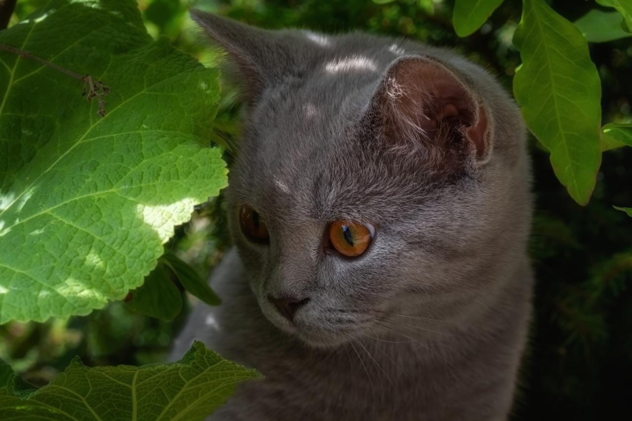 Фотография котят Кошки серые Морда смотрит Животные Котята котенка котенок кот коты кошка Серый серая морды Взгляд смотрят животное