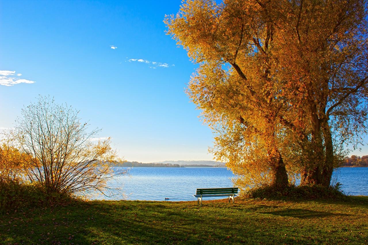 Фото Осень Природа Озеро траве Скамья дерево осенние Трава Скамейка дерева Деревья деревьев