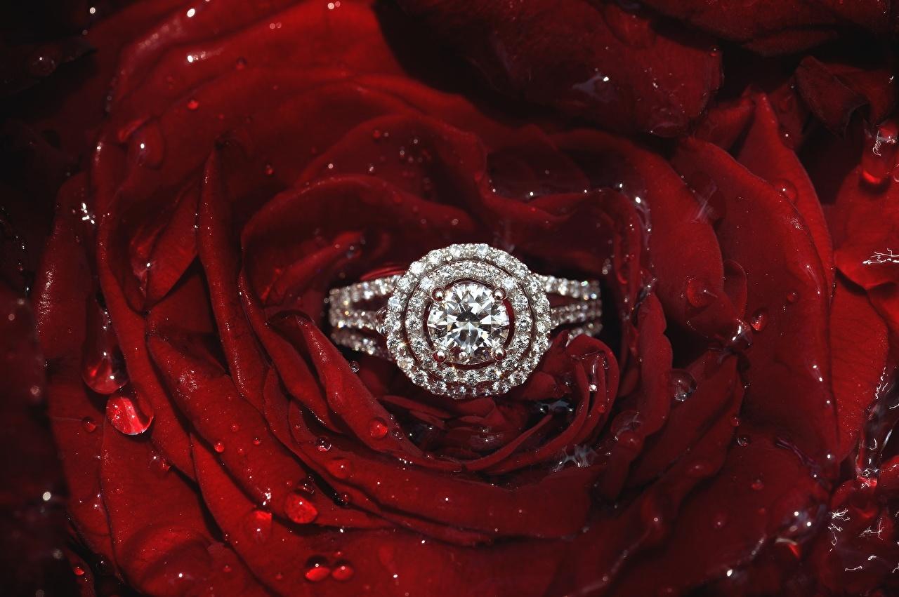 Фотографии Бриллиант Розы Лепестки Цветы кольца Крупным планом алмаз обработанный роза лепестков цветок кольца Кольцо ювелирное кольцо вблизи