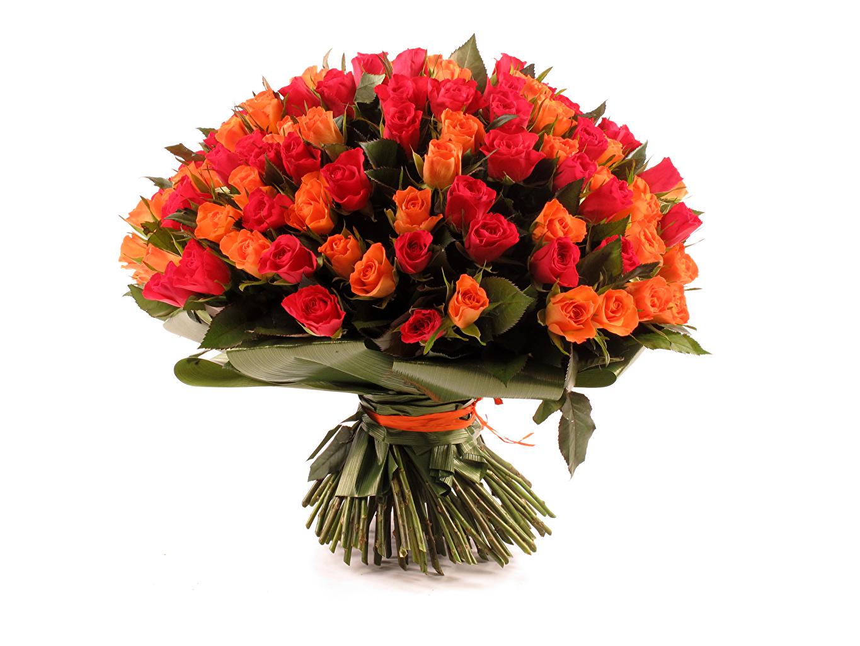 Обои для рабочего стола розы оранжевые