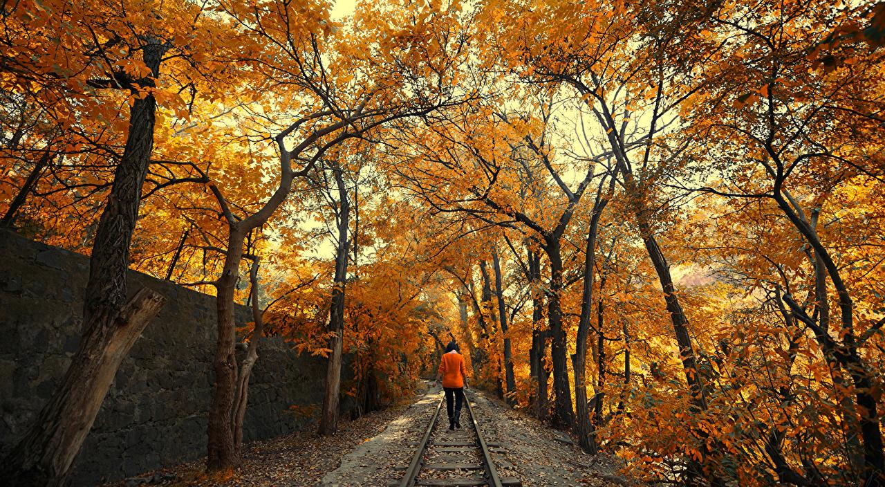 Обои для рабочего стола осенние Природа Девушки Железные дороги деревьев Осень девушка молодая женщина молодые женщины дерево дерева Деревья