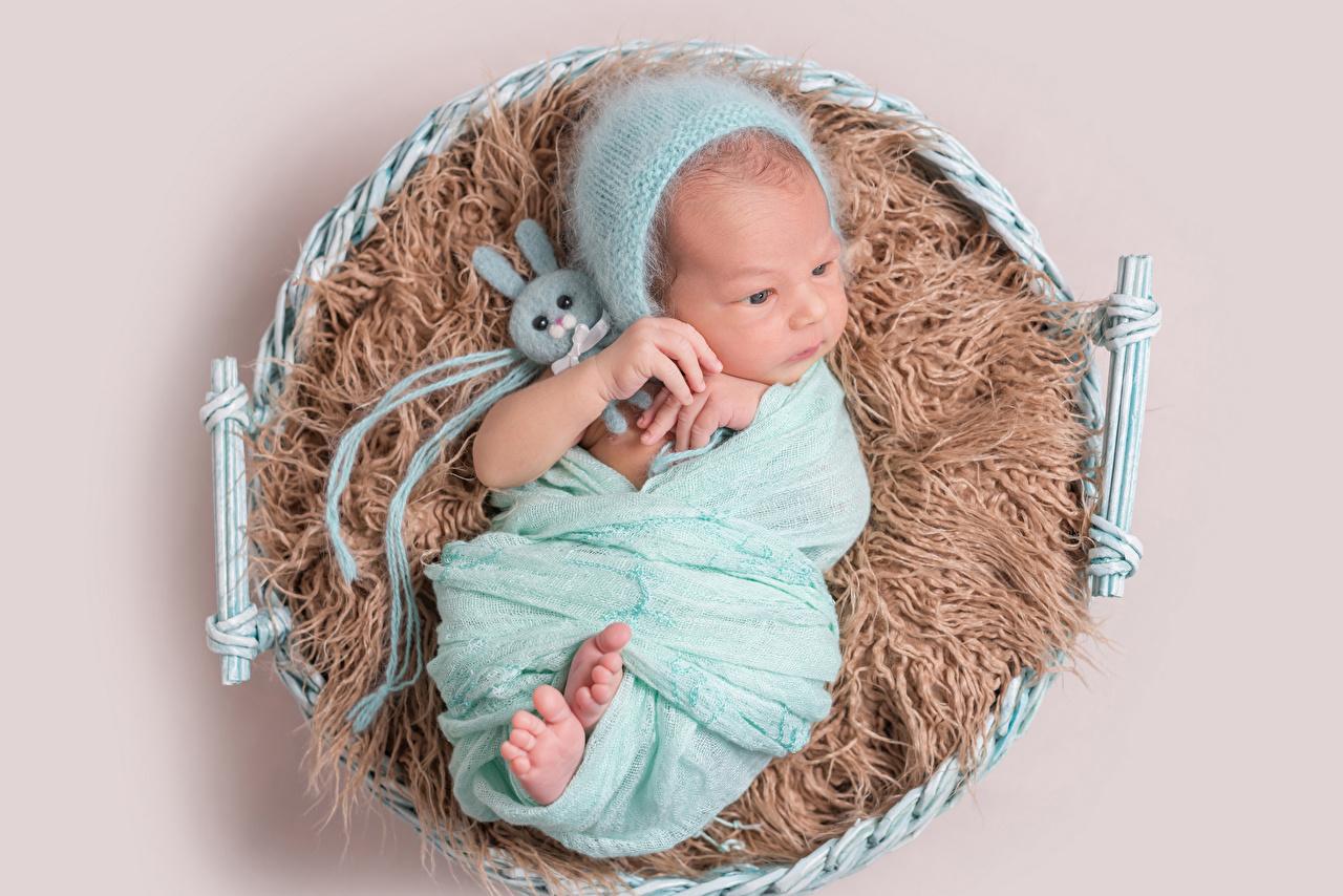 Фотографии Зайцы Младенцы Дети Шапки Игрушки Цветной фон младенца младенец грудной ребёнок ребёнок шапка в шапке игрушка