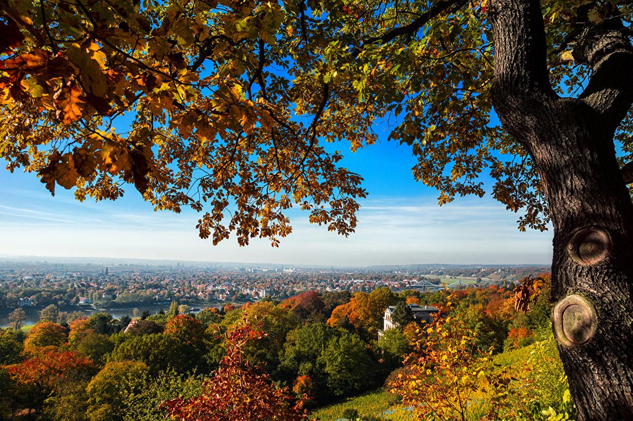 Фотографии Дрезден Германия Природа дерева Города город дерево Деревья деревьев