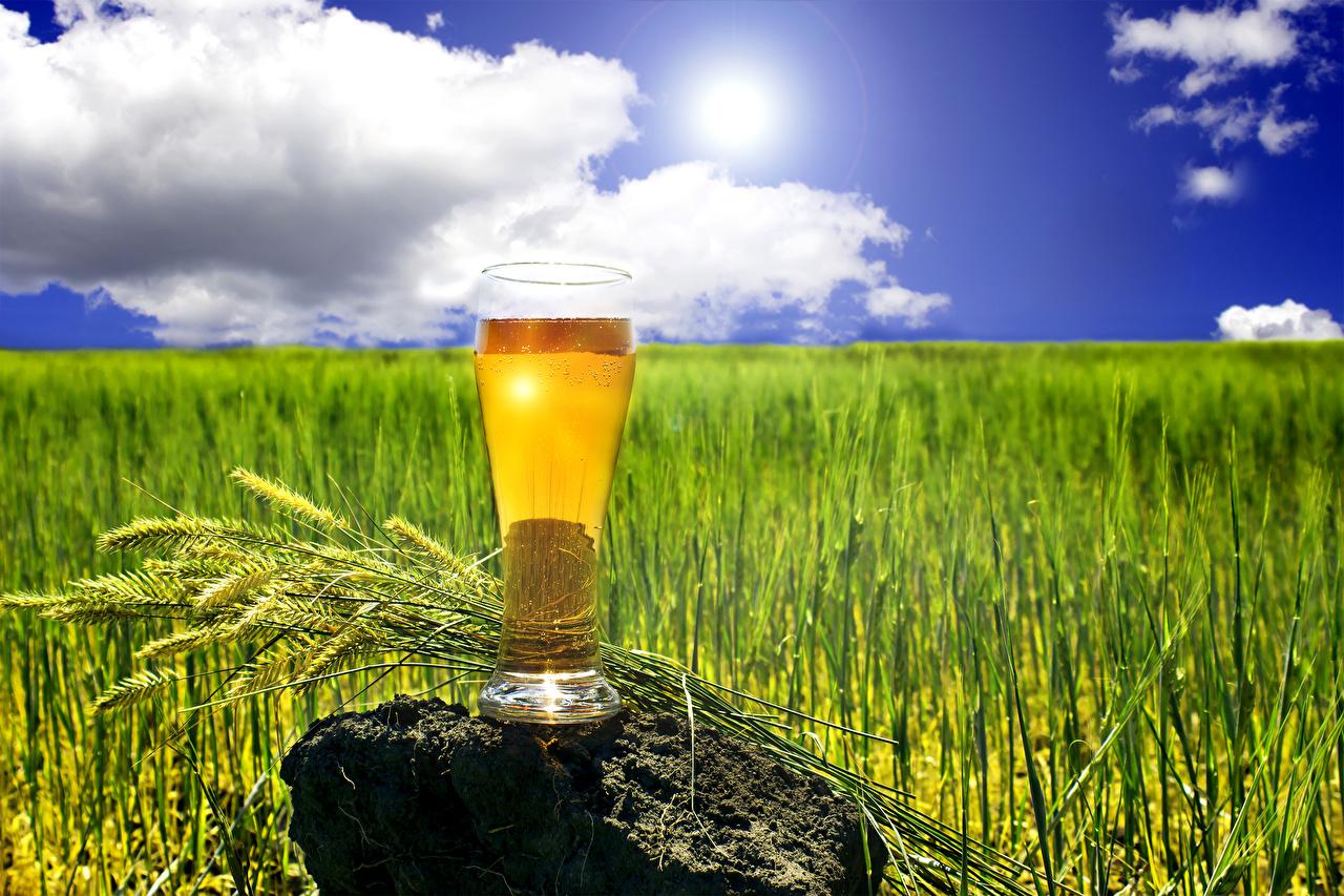 Картинка Пиво Колос Стакан Пища Камни Еда Камень Продукты питания