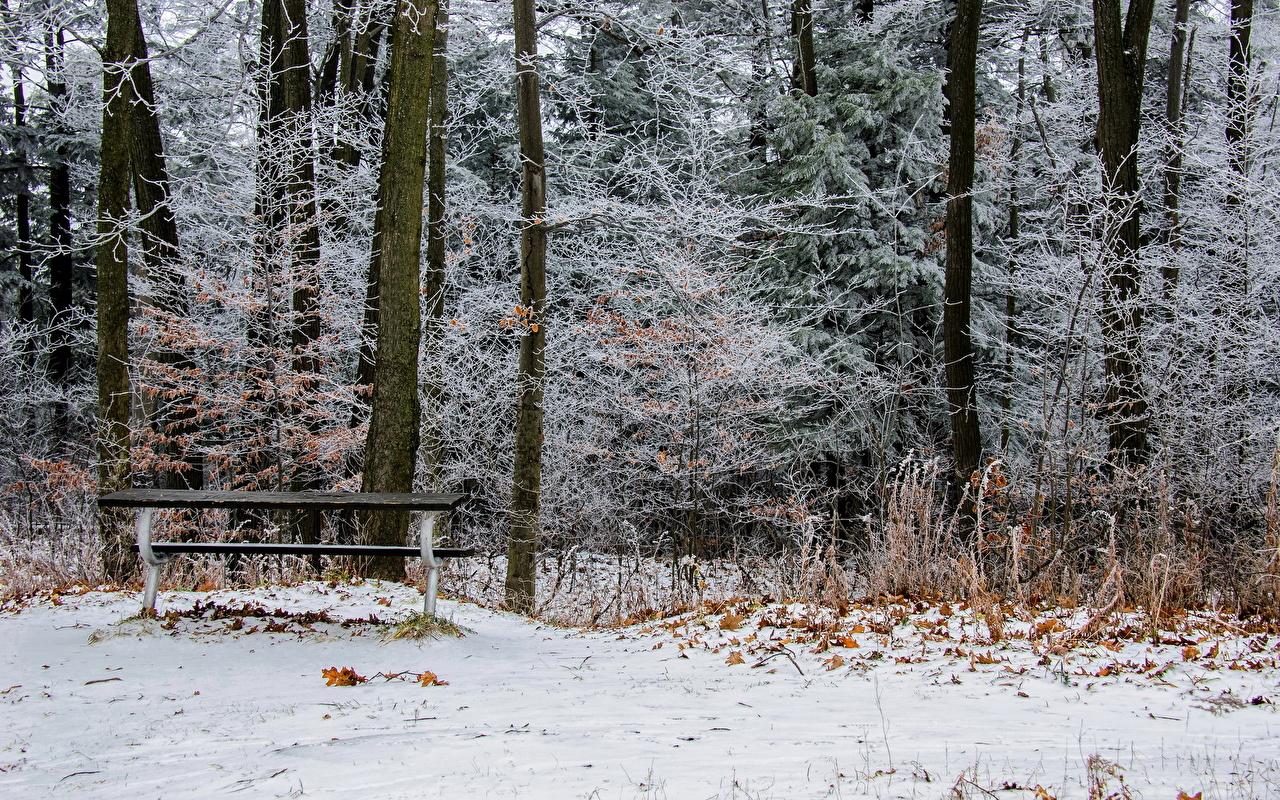 Фотография Канада Ontario Homer Watson Park Lookout Зима Природа Парки Скамейка зимние парк Скамья