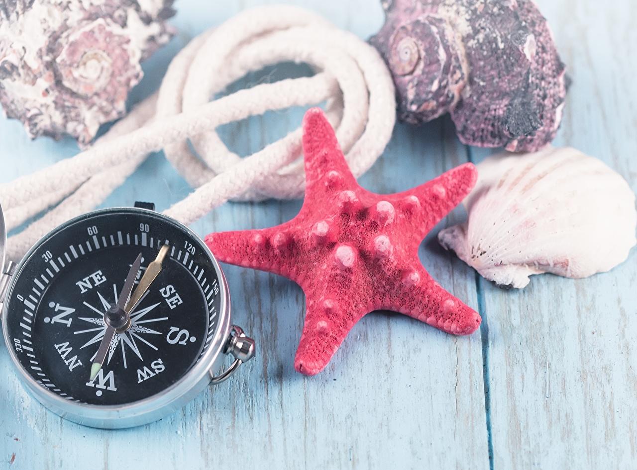 Фотография Морские звезды компаса Ракушки География Компас