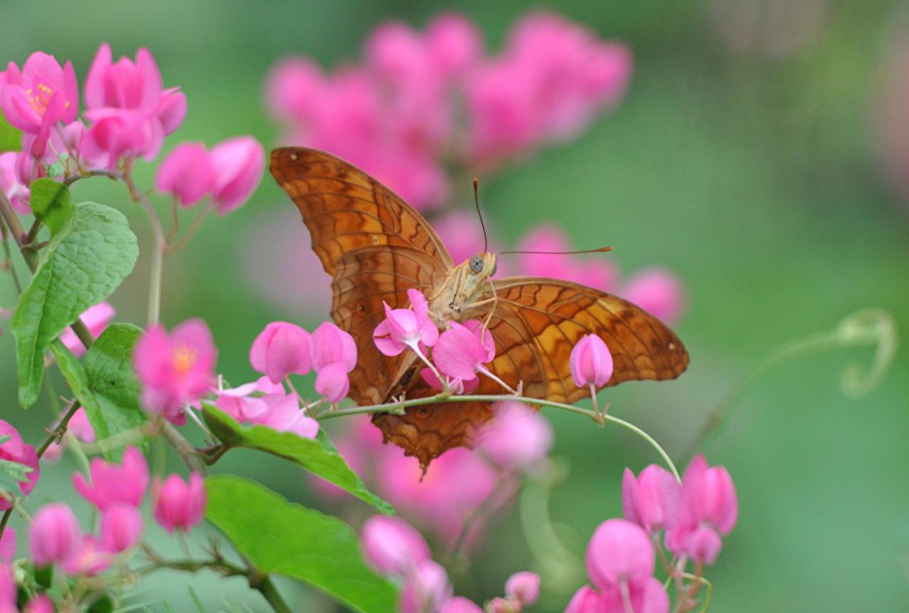 Картинки Бабочки Насекомые Цветы животное Крупным планом бабочка насекомое цветок вблизи Животные