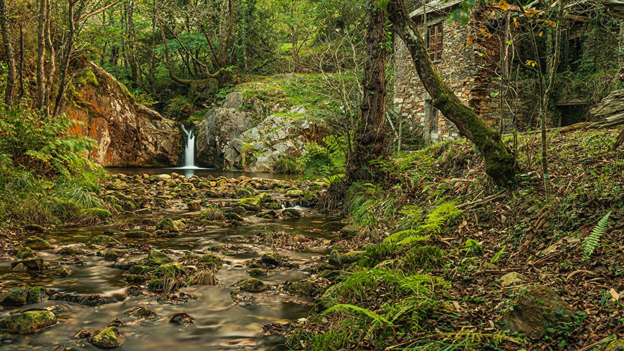 Фото лист Испания Asturias ручеек Природа Леса Камни деревьев Листва Листья Ручей лес Камень дерево дерева Деревья