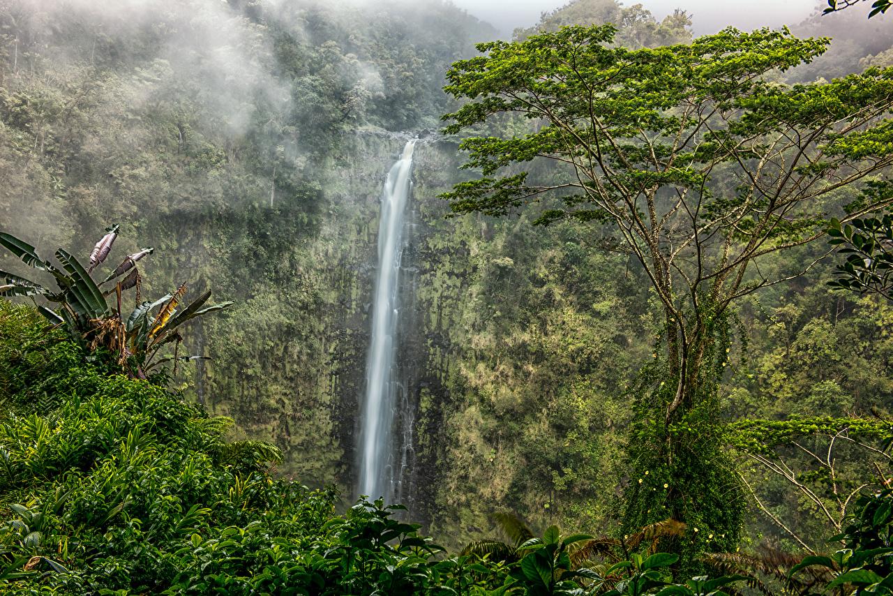 Водопады, Парки, Леса, США Akaka Falls State Park Гавайи, Скала штаты, Утес,  Природа