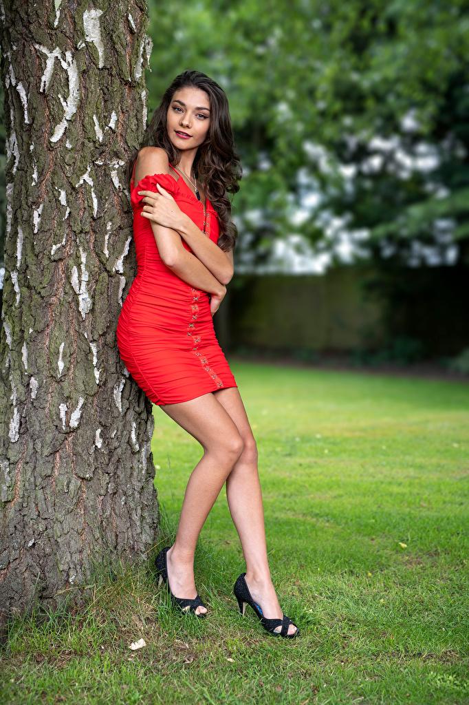 Картинки Модель Elle позирует девушка Ноги Ствол дерева смотрит Платье  для мобильного телефона фотомодель Поза Девушки молодая женщина молодые женщины ног Взгляд смотрят платья