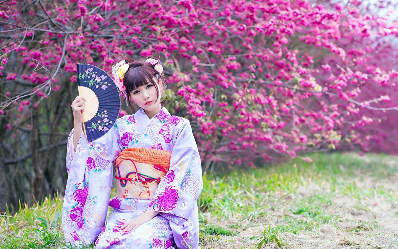 Фото Шатенка боке Веер Кимоно молодая женщина азиатки смотрит Цветущие деревья шатенки Размытый фон девушка Девушки молодые женщины Азиаты азиатка Взгляд смотрят