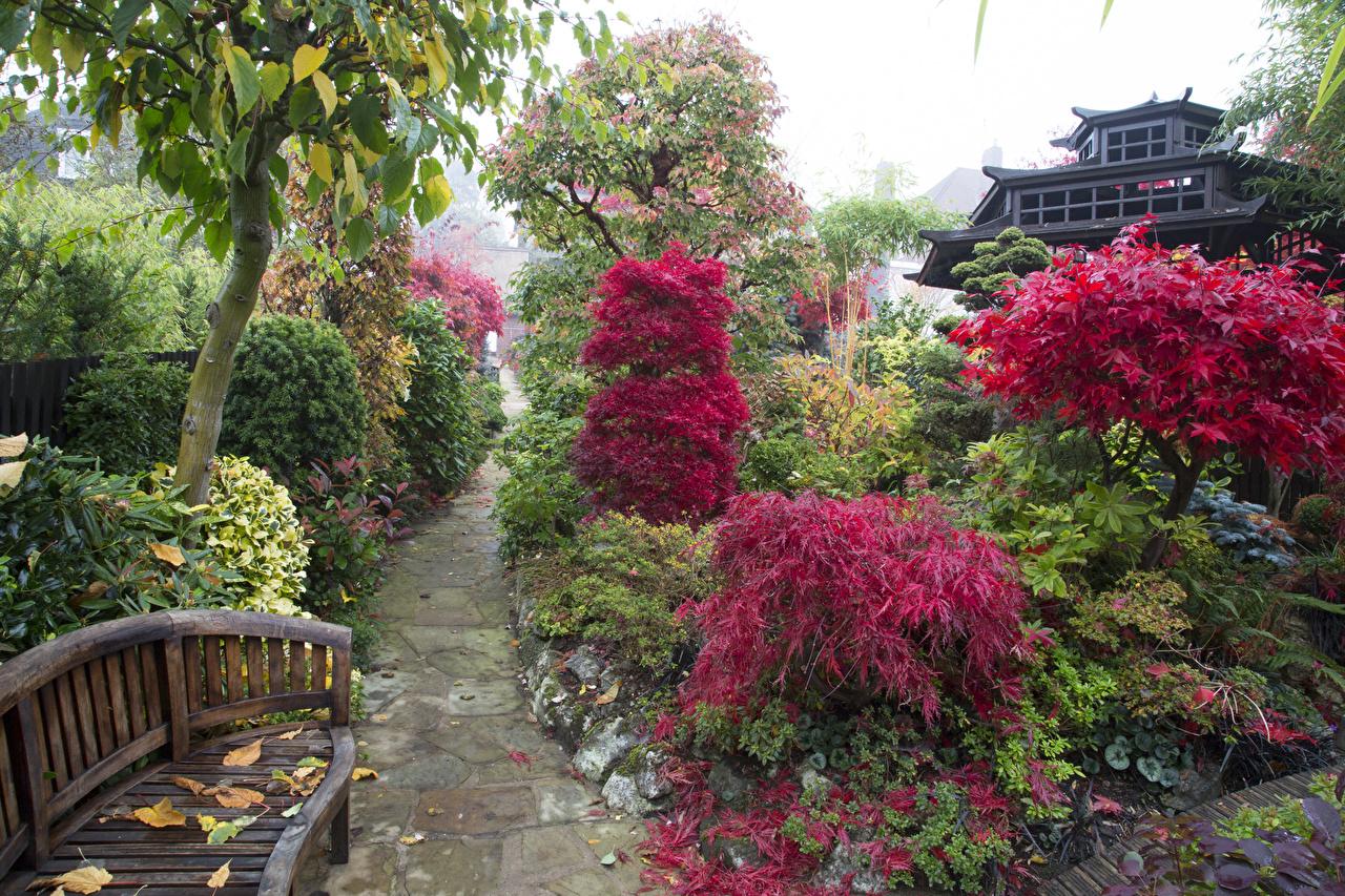 Картинка Великобритания Walsall Garden Природа Сады Скамейка Кусты Скамья кустов