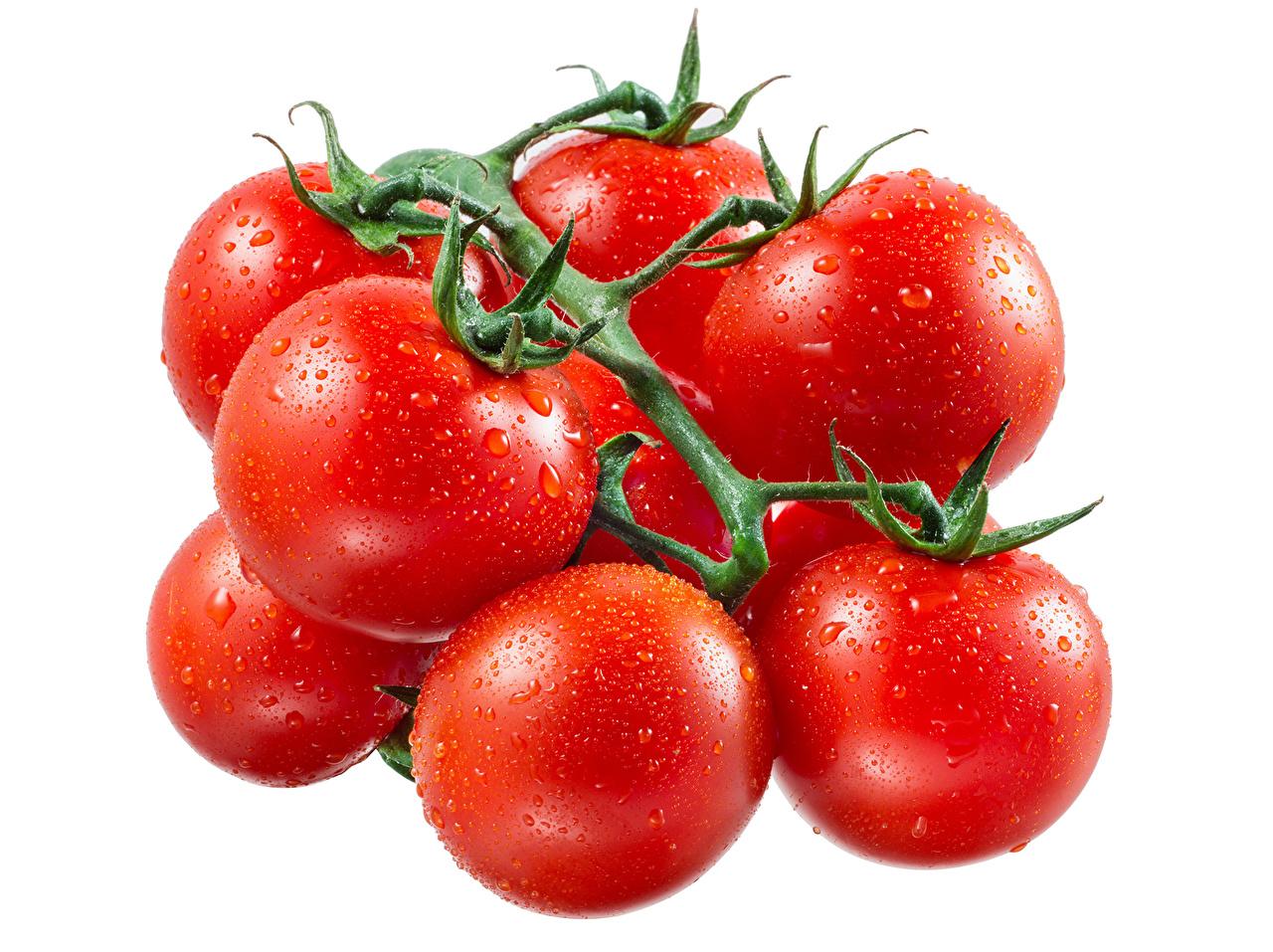 Фотография Красный Помидоры капельки Овощи Продукты питания Много Томаты красная красные красных капля Капли капель Еда Пища