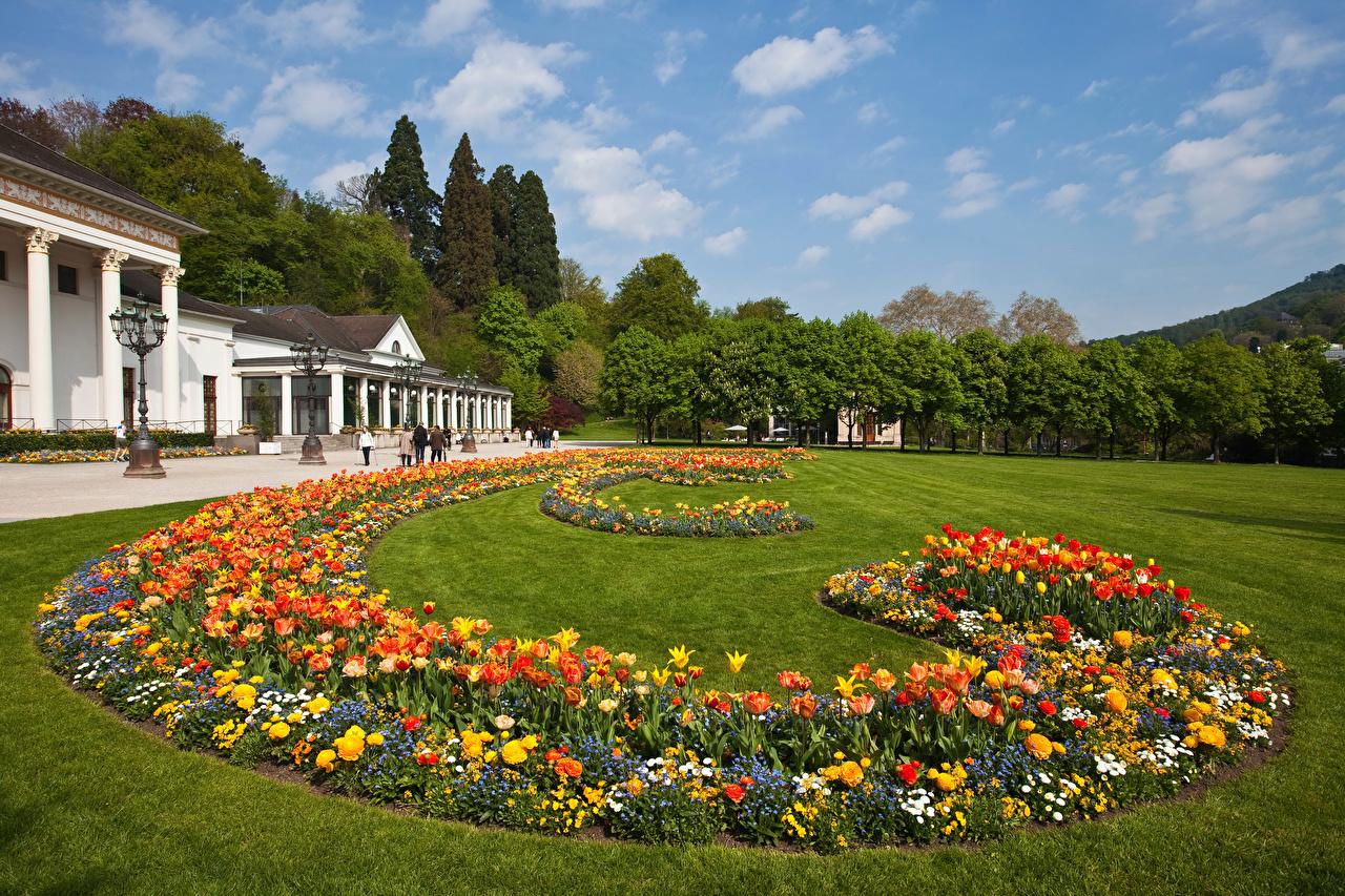 Фото Германия Baden-Baden Природа Тюльпаны парк газоне тюльпан Парки Газон