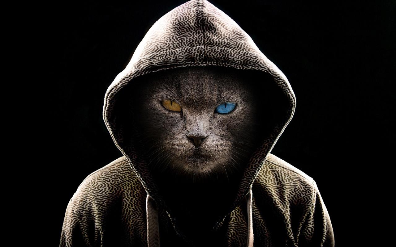 Фото кот оригинальные смотрит Животные капюшоне на черном фоне коты Кошки кошка Креатив креативные Взгляд Капюшон смотрят животное капюшоном Черный фон