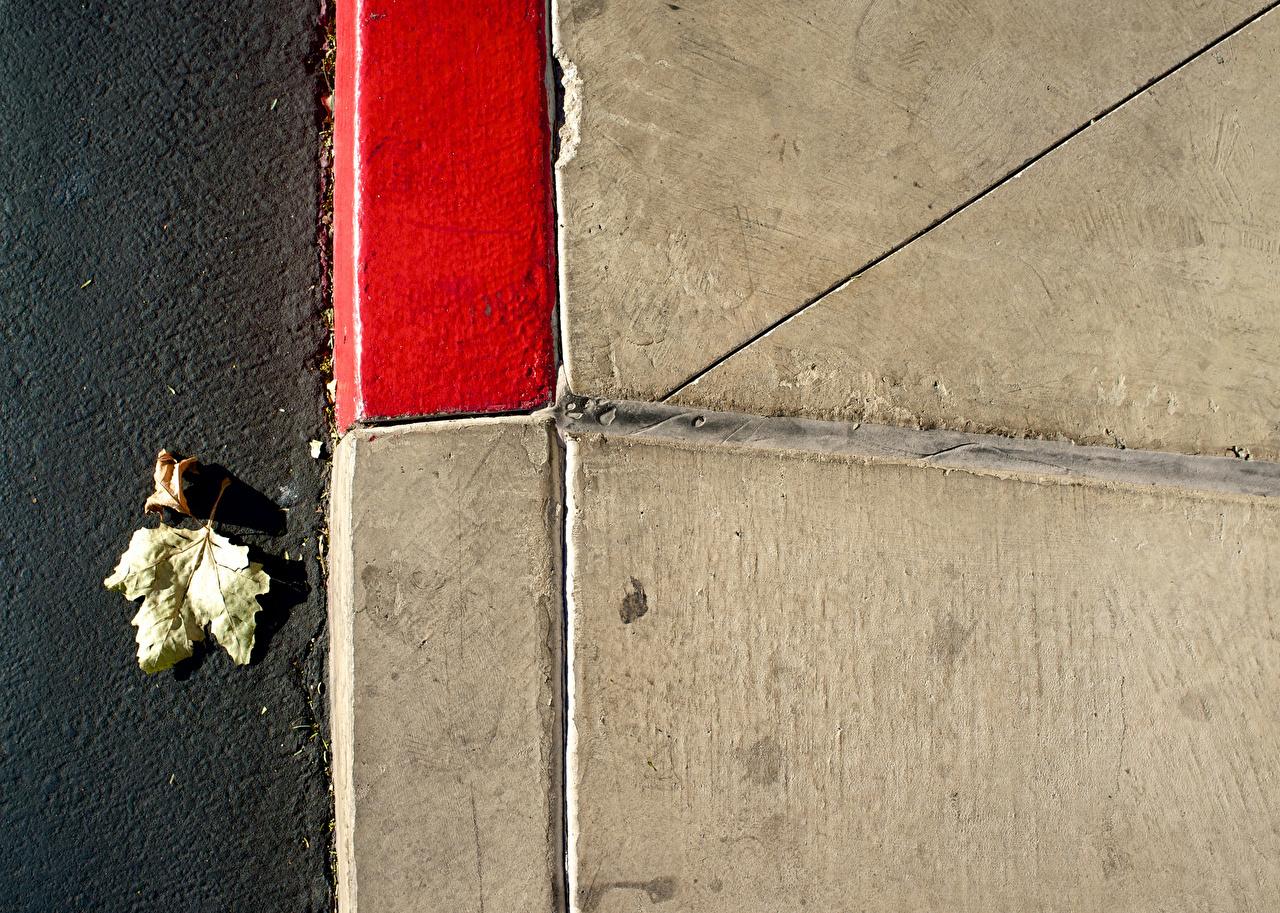 Фото Листья асфальта вблизи лист Листва Асфальт Крупным планом