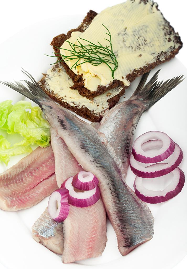Фотографии масла Лук репчатый Хлеб Рыба Еда белым фоном Морепродукты Масло Пища Продукты питания Белый фон белом фоне