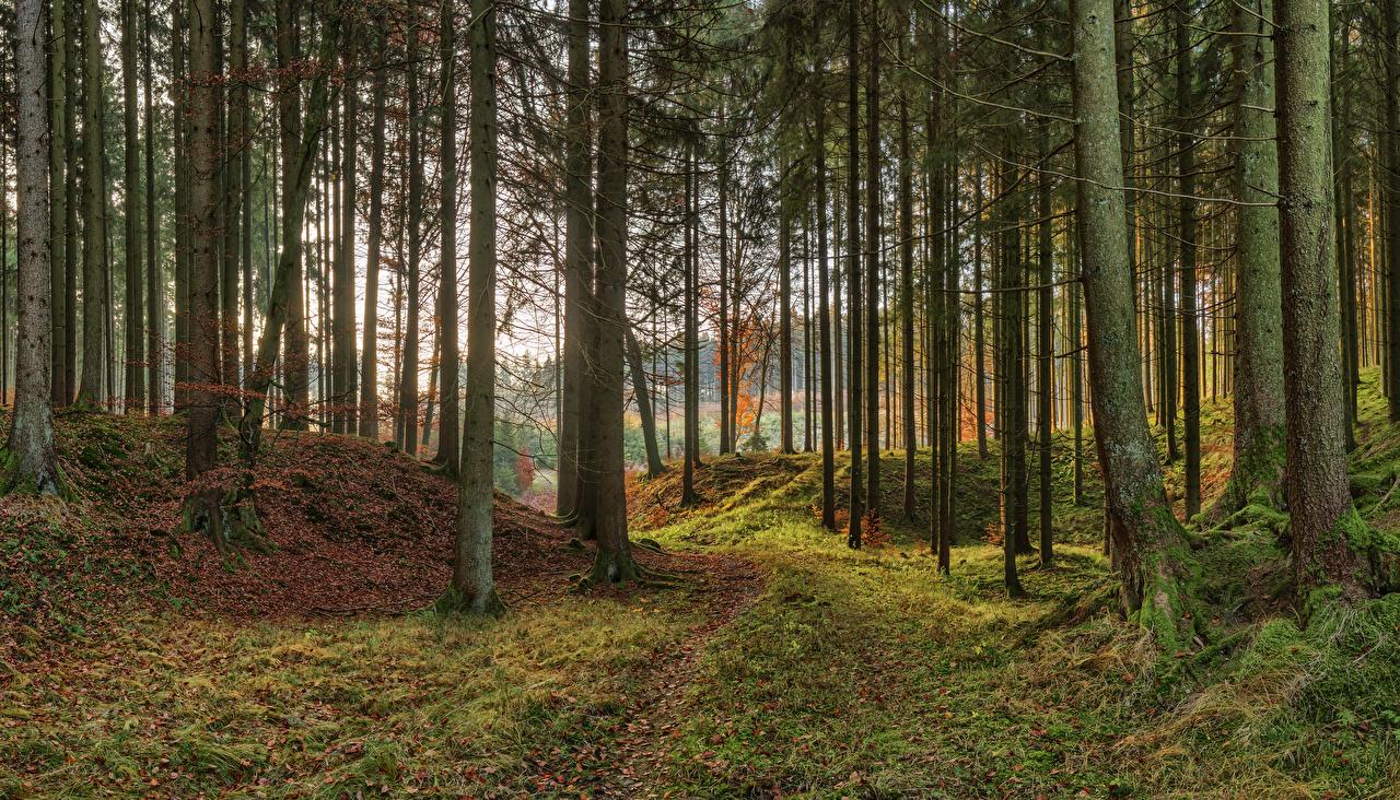 Фотография Бавария Германия осенние Природа парк мха дерева Осень Парки Мох мхом дерево Деревья деревьев