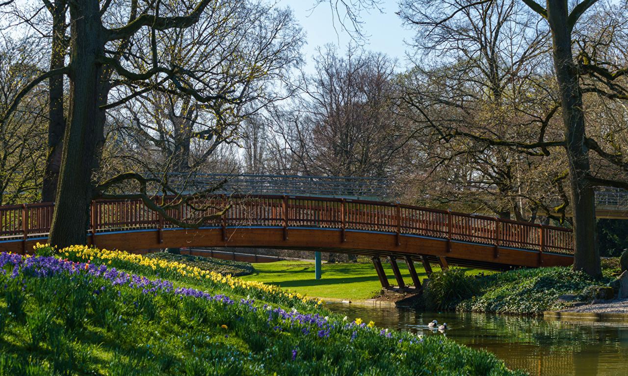 Фотография Германия Karlsruhe мост Весна Природа Парки Реки дерева Мосты весенние парк река речка дерево Деревья деревьев