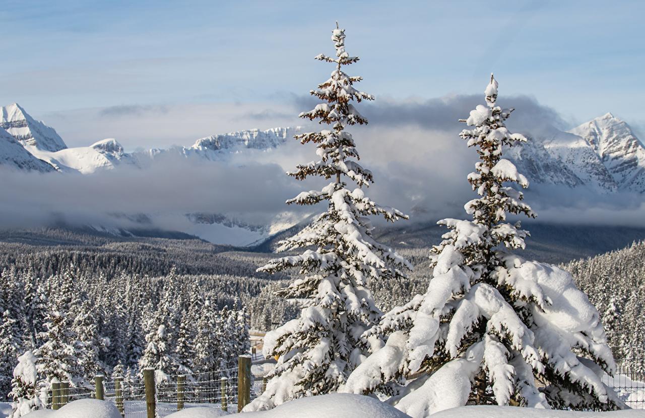Картинка Канада Alberta Туман Ель Зима Природа Снег Леса зимние