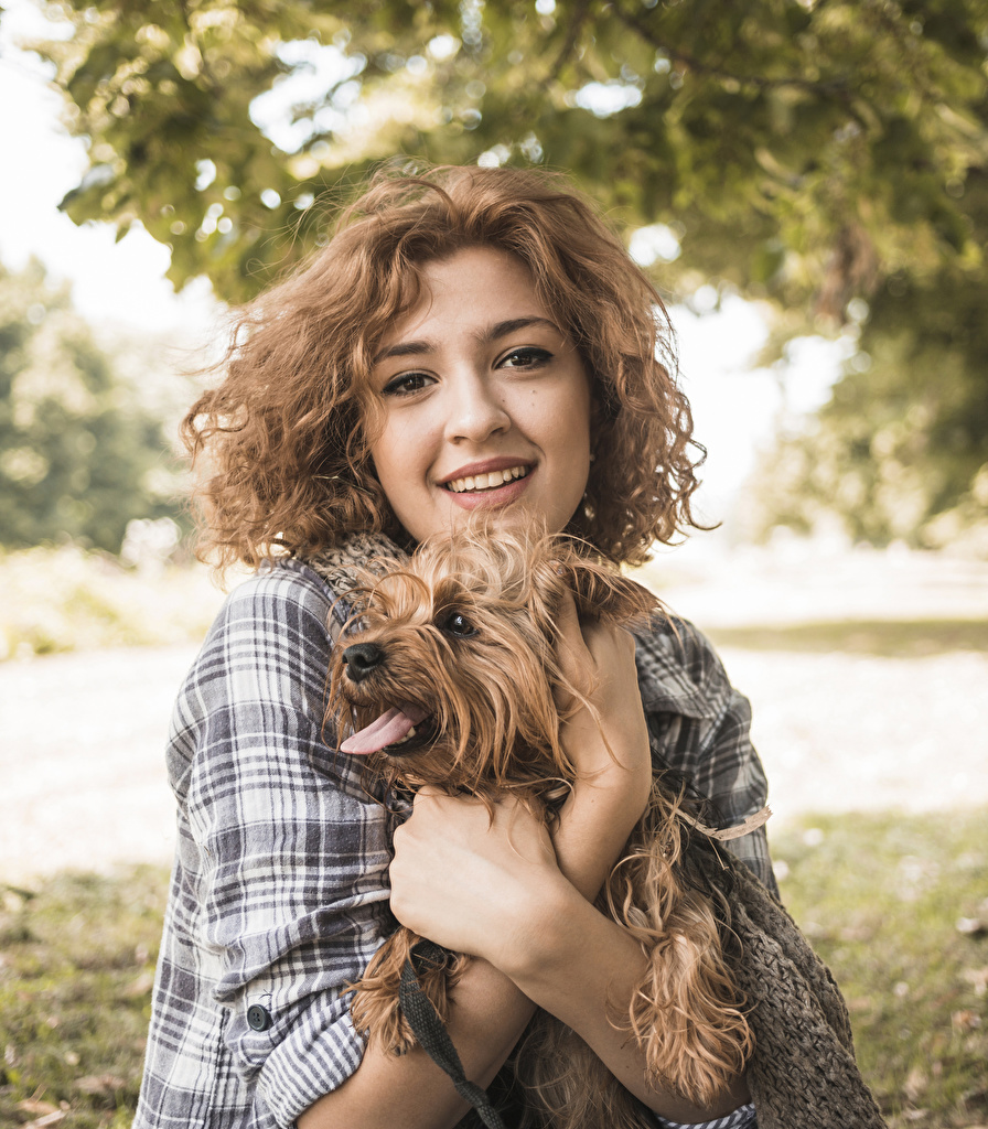 Картинка Йоркширский терьер Собаки Шатенка Девушки Руки смотрит Животные Взгляд
