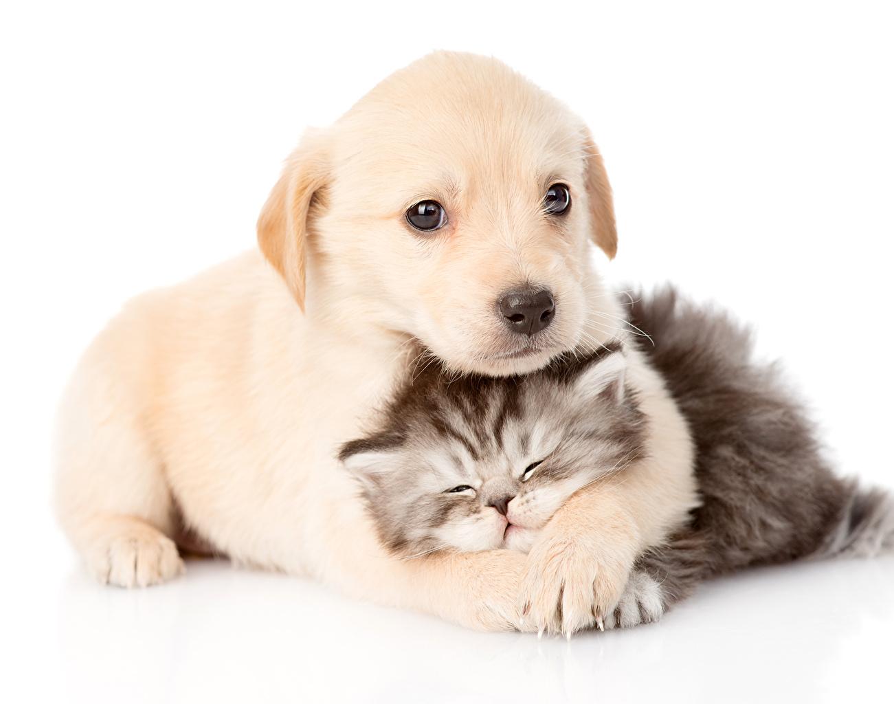 Обои кот, Собака, щенок. Собаки foto 6