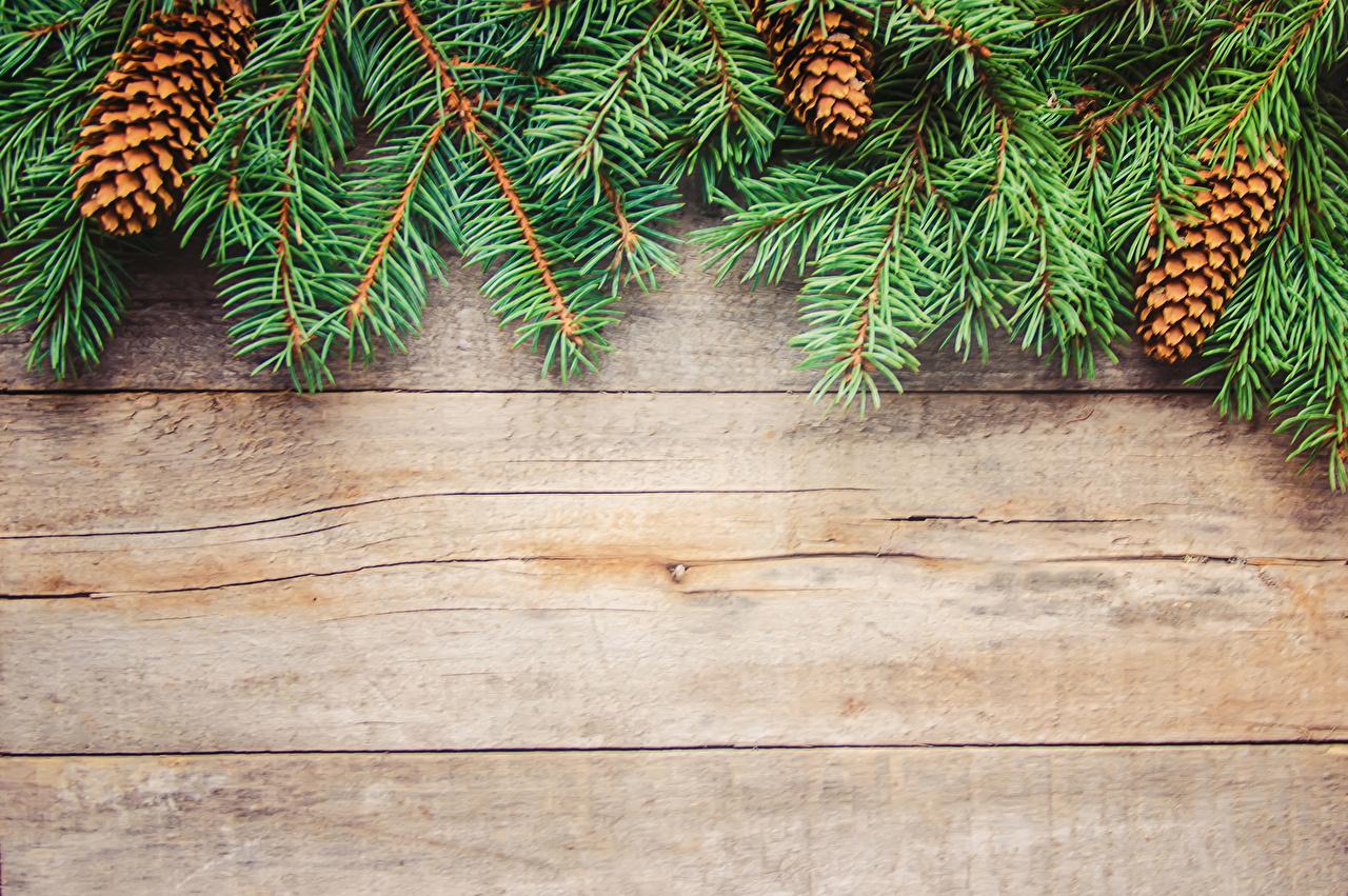 Фотографии Новый год шишка ветвь Доски Рождество Шишки ветка Ветки на ветке