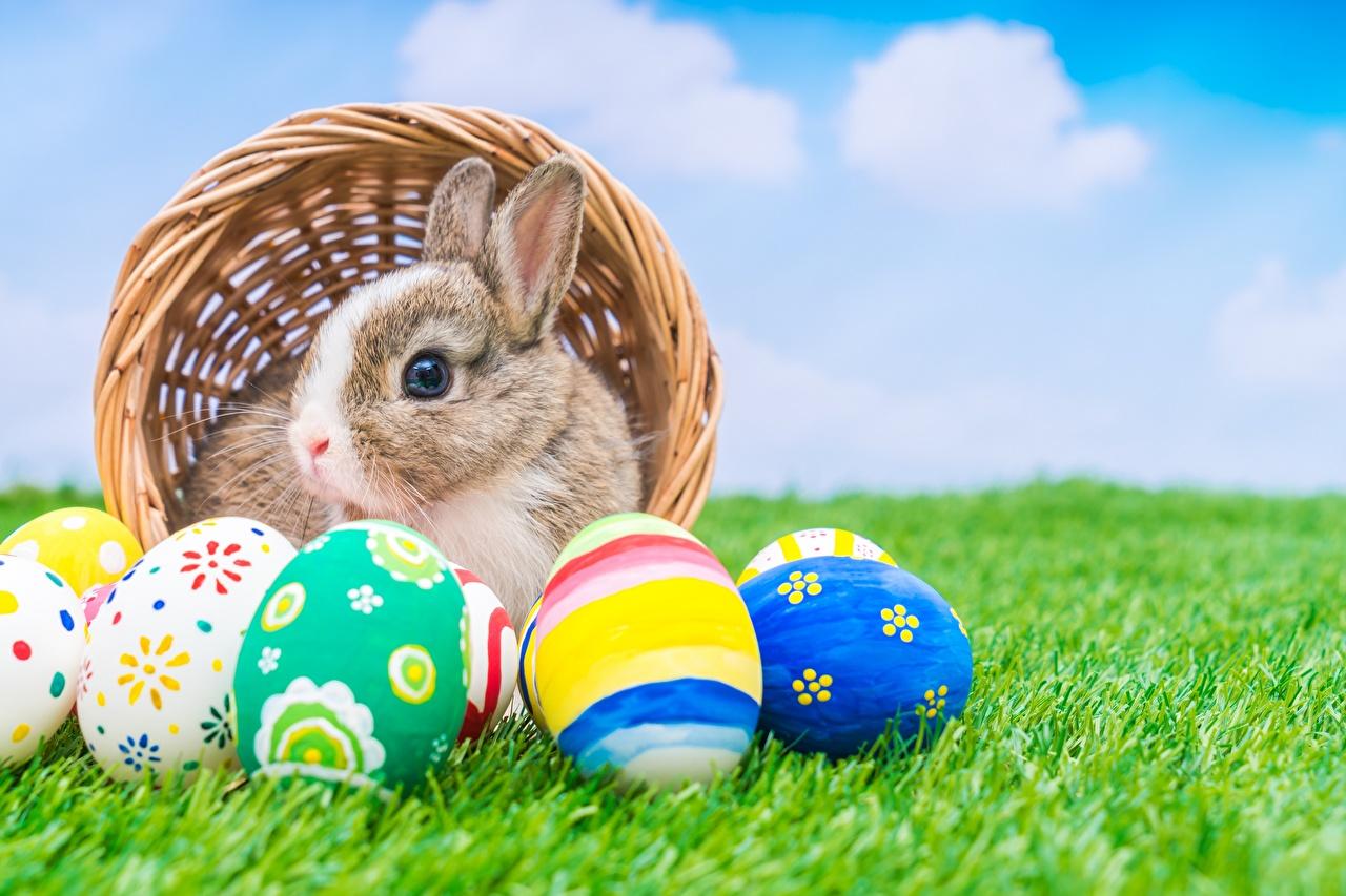 Картинки Пасха Кролики Яйца Трава Животные кролик яиц яйцо яйцами траве животное