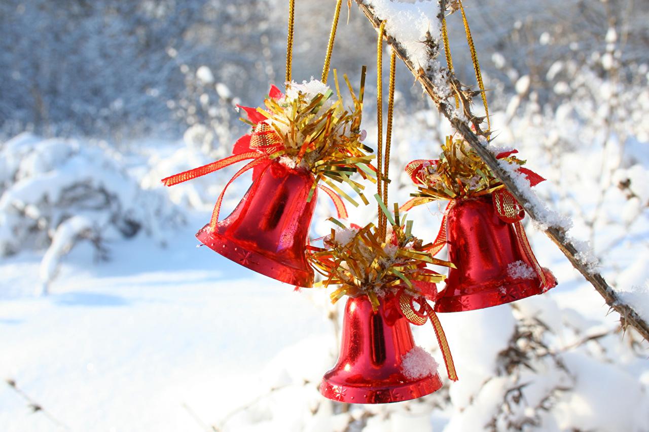 Фотография Рождество красные снега втроем Колокольчики Новый год красных Красный красная Снег снеге снегу три Трое 3 колокольчик