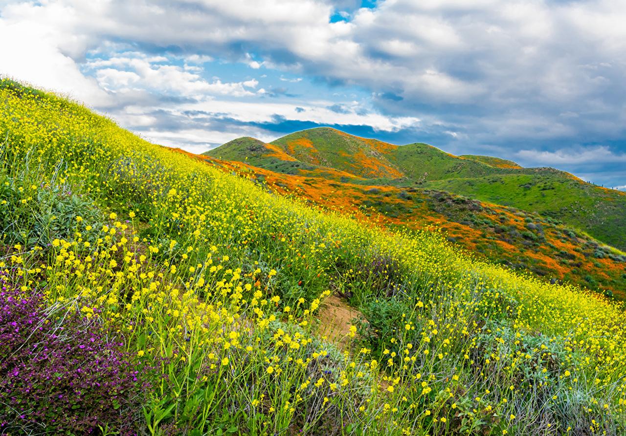 Обои для рабочего стола Калифорния США Walker Canyon in Lake Elsinore Природа Поля Холмы Мох траве калифорнии штаты америка холм холмов мха мхом Трава