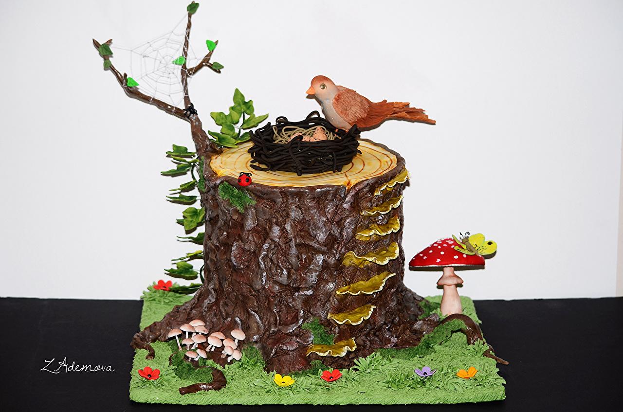 Фото Птицы Торты пне Пища Грибы природа Сладости Дизайн Цветной фон птица Пень Еда Продукты питания сладкая еда дизайна