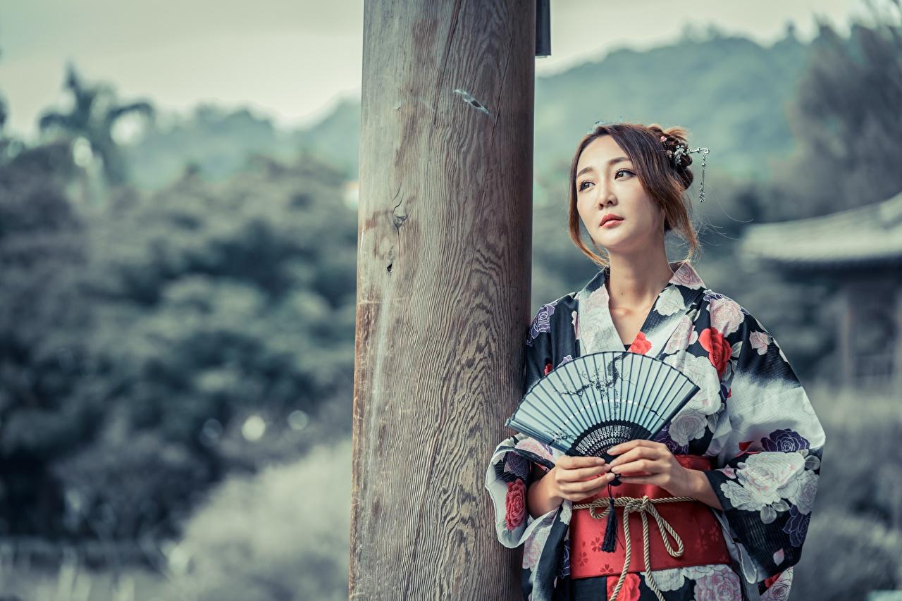 Фотография Шатенка боке Веер Кимоно девушка Азиаты смотрят шатенки Размытый фон Девушки молодая женщина молодые женщины азиатки азиатка Взгляд смотрит
