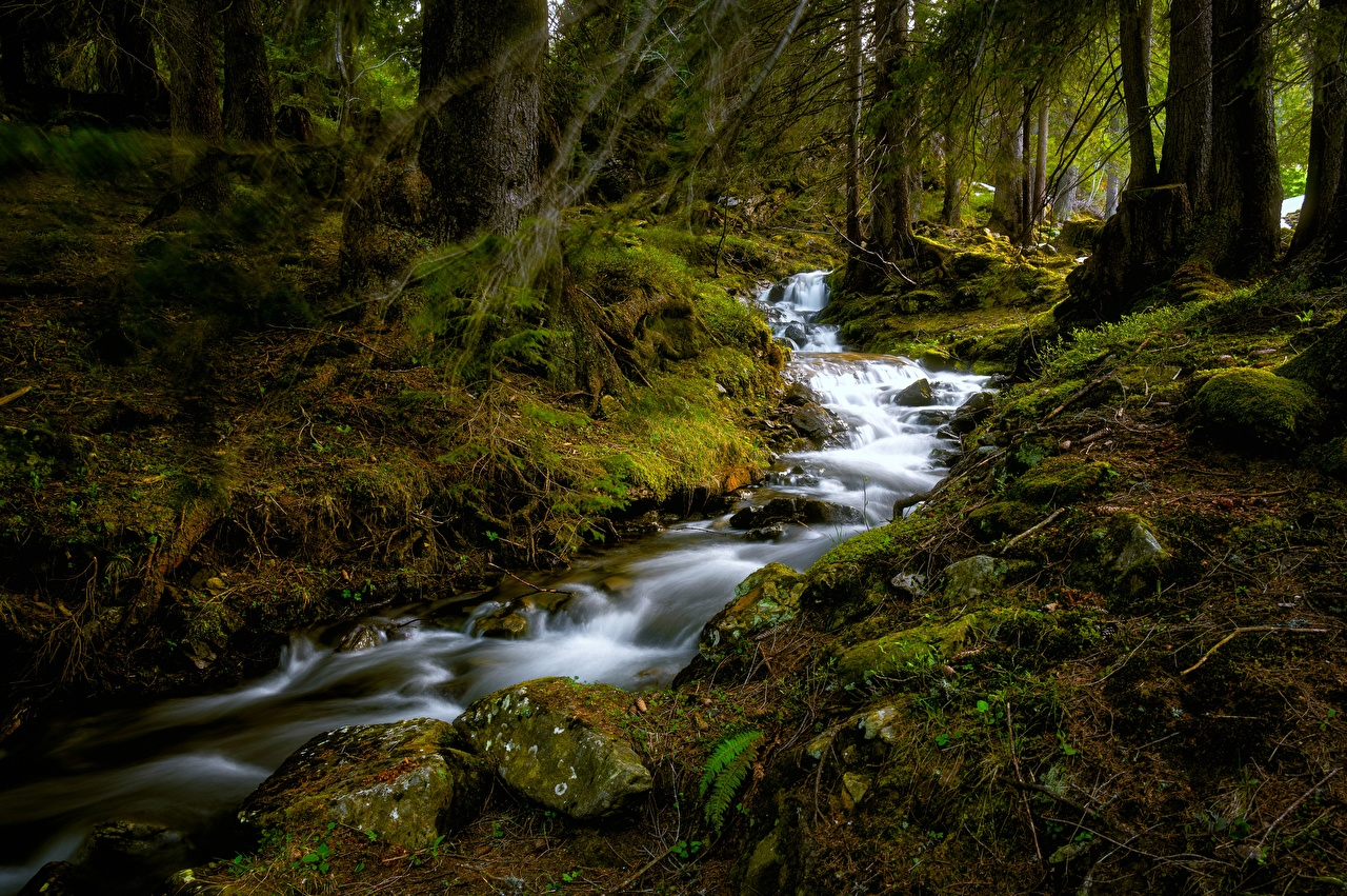 Фотография Швейцария Büelbach Ручей Природа Леса мха Камни дерево ручеек лес Мох мхом Камень дерева Деревья деревьев