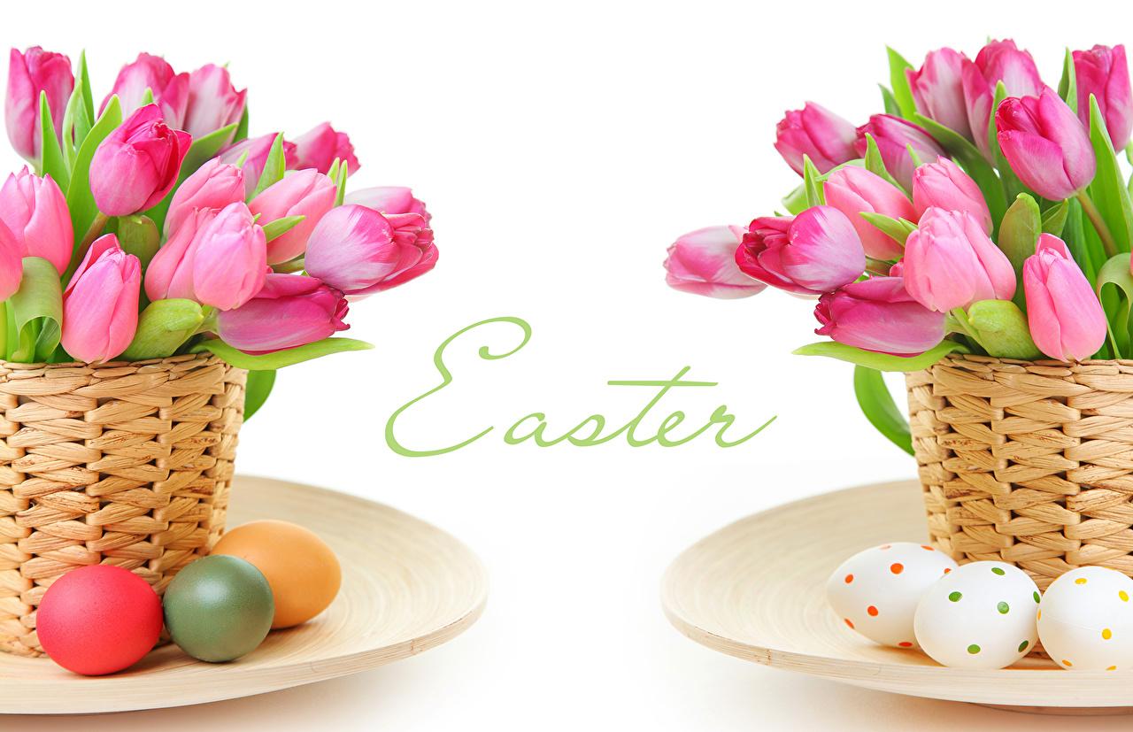 Картинки Пасха яиц Розовый Тюльпаны цветок Корзинка Праздники яйцо Яйца яйцами тюльпан розовая розовые розовых Цветы Корзина корзины