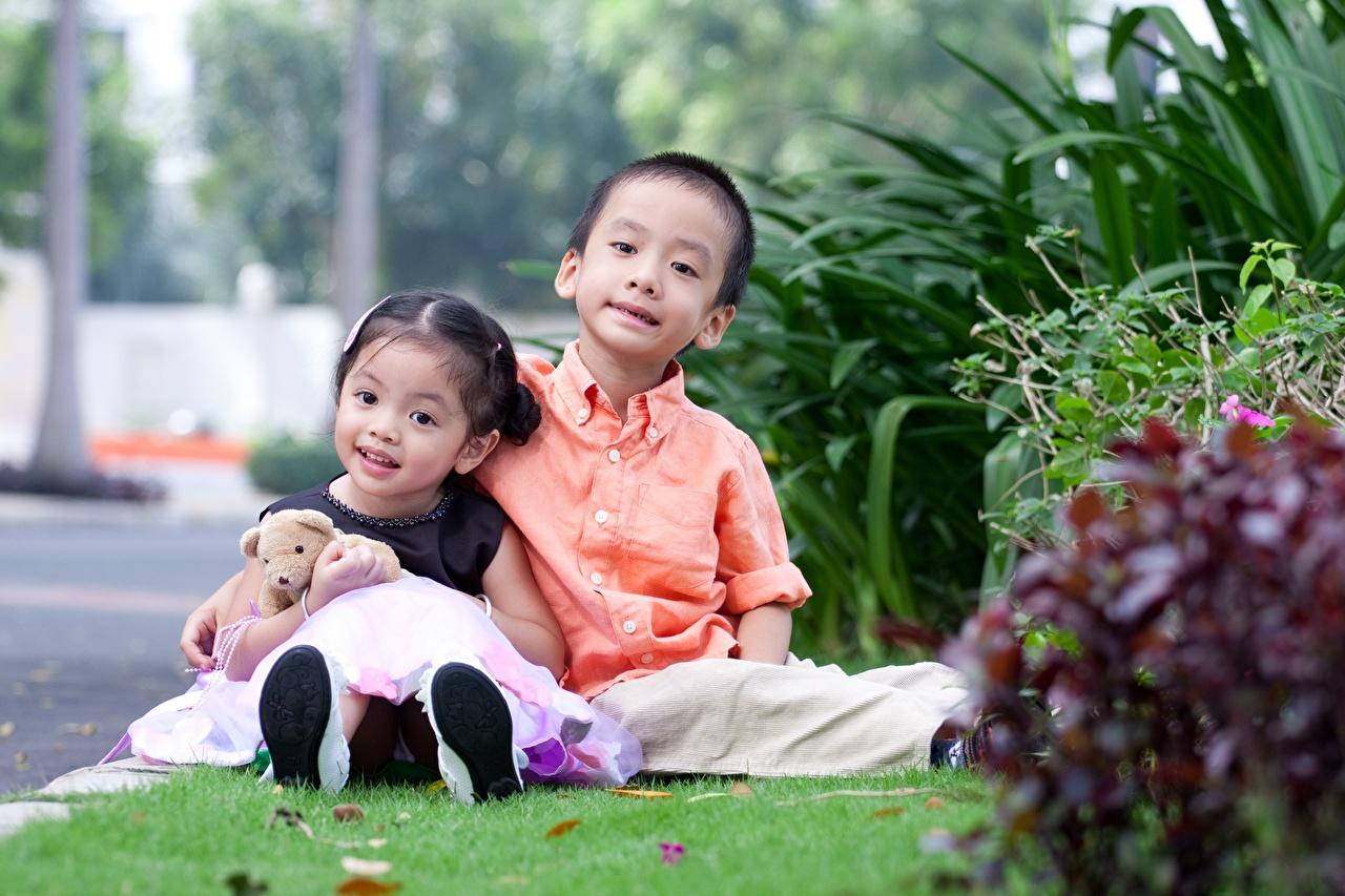 Фотография Девочки Мальчики Ребёнок вдвоем Азиаты Плюшевый мишка Трава сидящие Дети 2 Двое Мишки Сидит