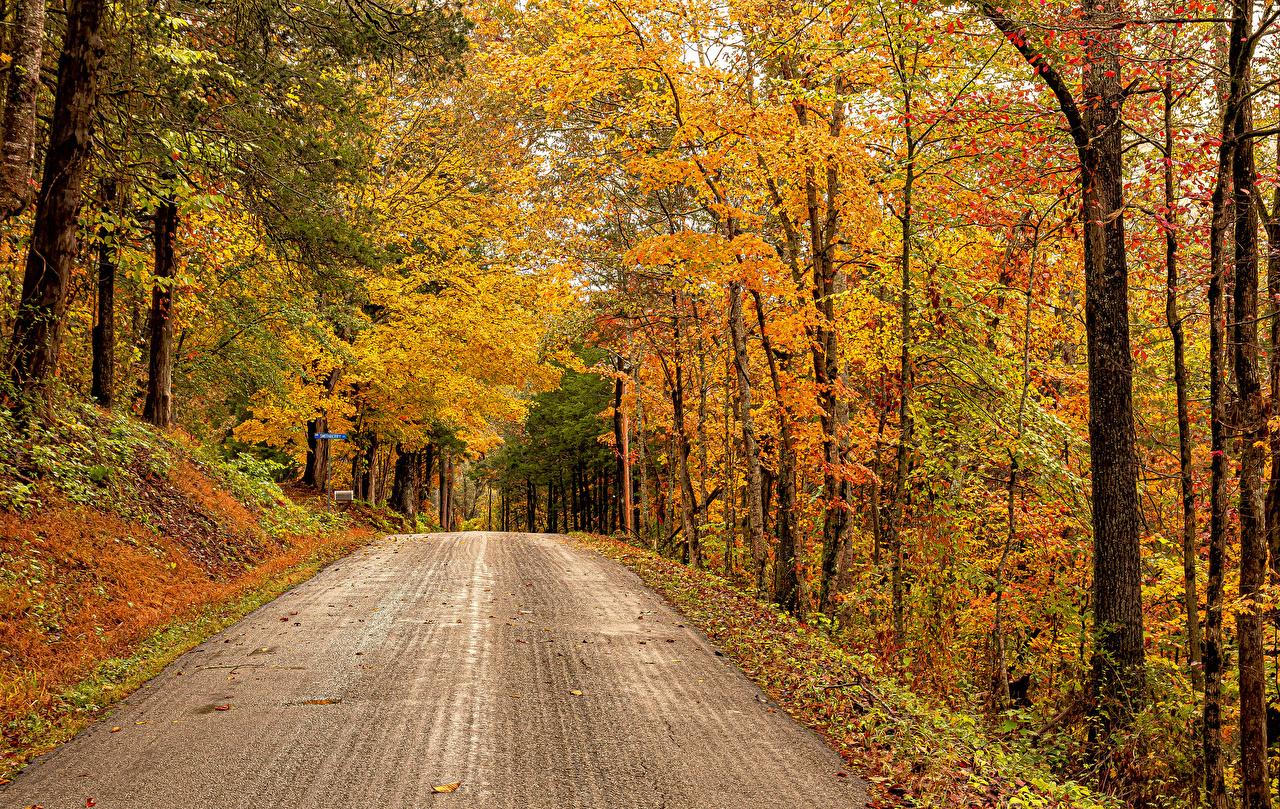 Картинки америка Rose Hill, Virginia Осень Природа лес Дороги дерево США штаты осенние Леса дерева Деревья деревьев