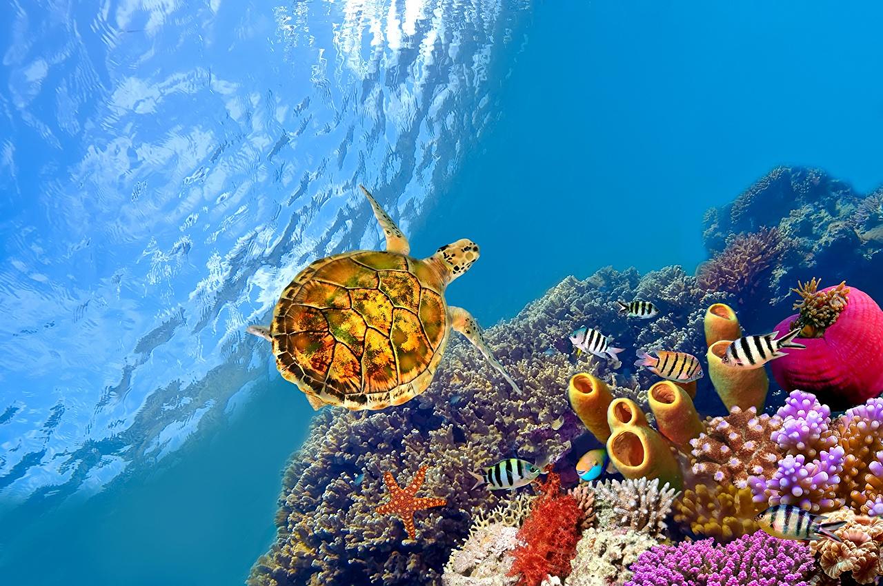 Обои для рабочего стола Рыбы Черепахи Подводный мир животное Животные