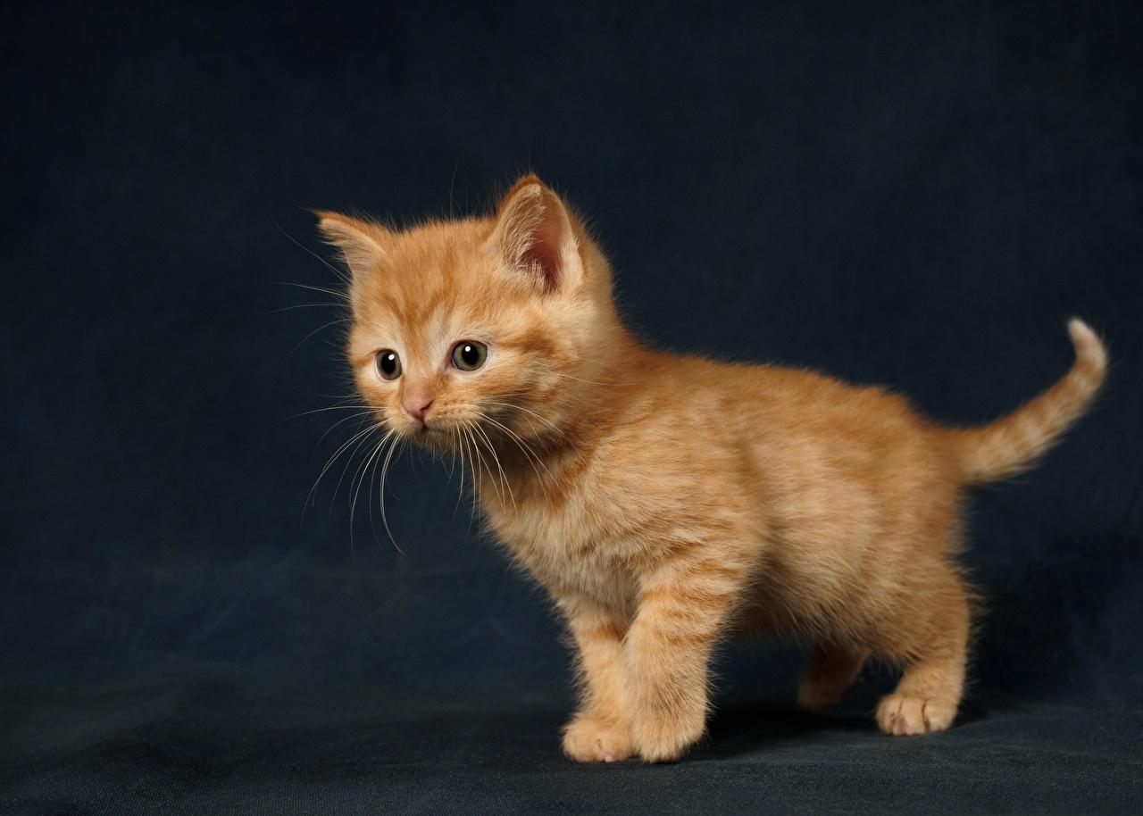 Картинки котят милая Рыжий животное Котята котенок котенка Милые милый Миленькие рыжая рыжие Животные