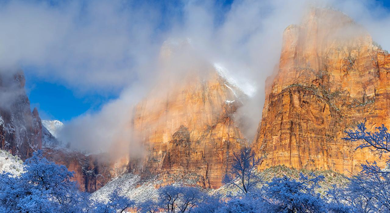 Фотография Зайон национальнай парк штаты Горы Скала зимние Природа Парки Ветки США Утес Зима ветвь