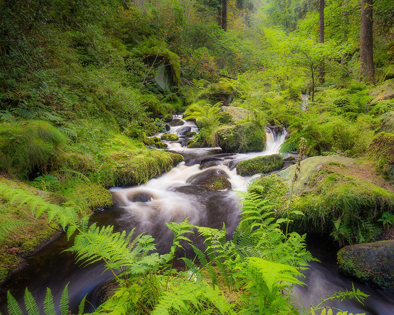 Фото Англия Wyming Brook, Sheffield Природа лес мха Реки Камни Леса Мох река мхом речка Камень